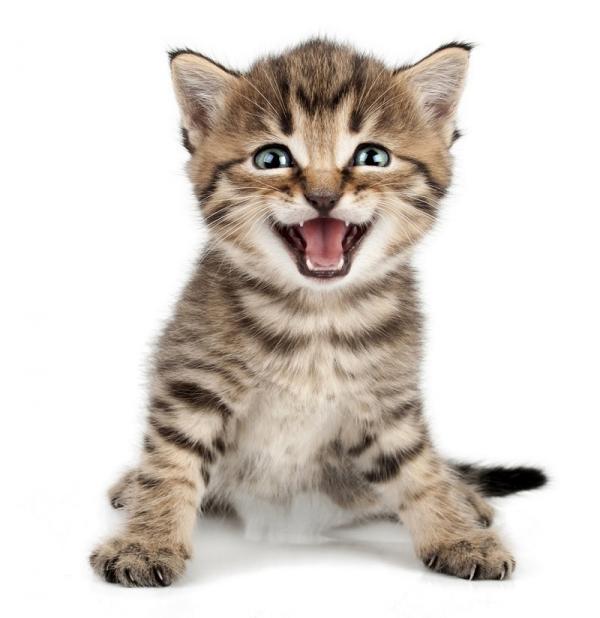 FIRMA INVITADA: Ahora todos somos gatos…