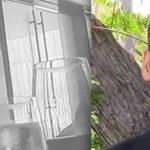 La justicia da la razón a David Daleiden, el hombre que desenmascaró a Planned Parenthood