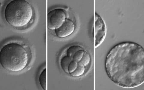 Manipulación genética de embriones, ¿qué dice la ética?